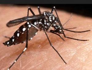 2014-04-03c Dengue 1